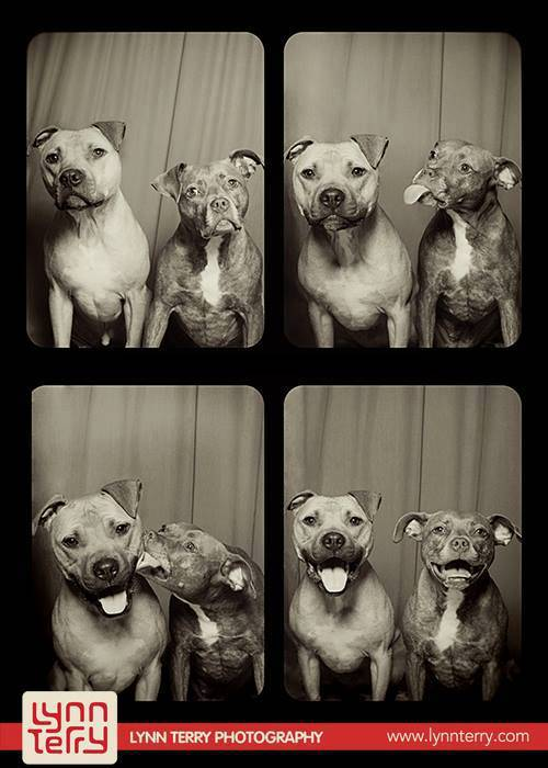 dogs-in-photo-booths-by-lynn-terry-11