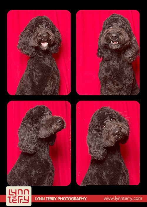 dogs-in-photo-booths-by-lynn-terry-2