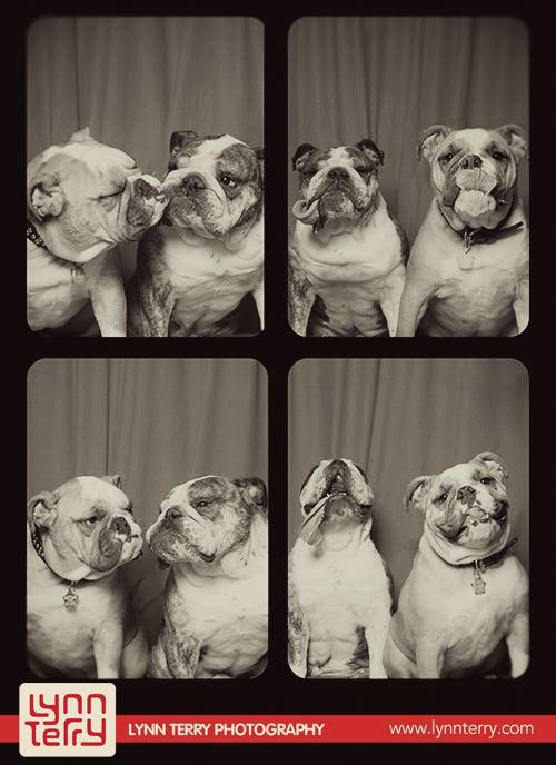 dogs-in-photo-booths-by-lynn-terry-3