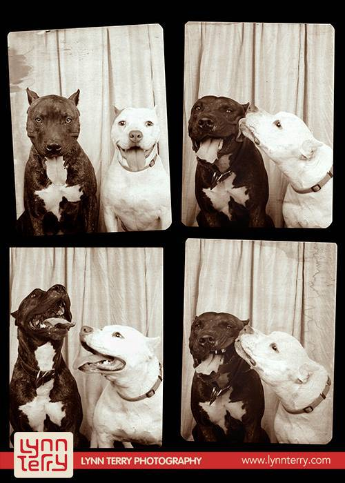 dogs-in-photo-booths-by-lynn-terry-4