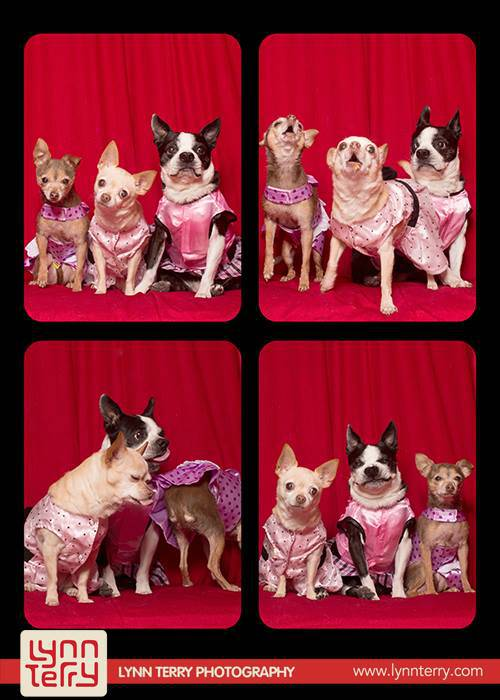 dogs-in-photo-booths-by-lynn-terry-5