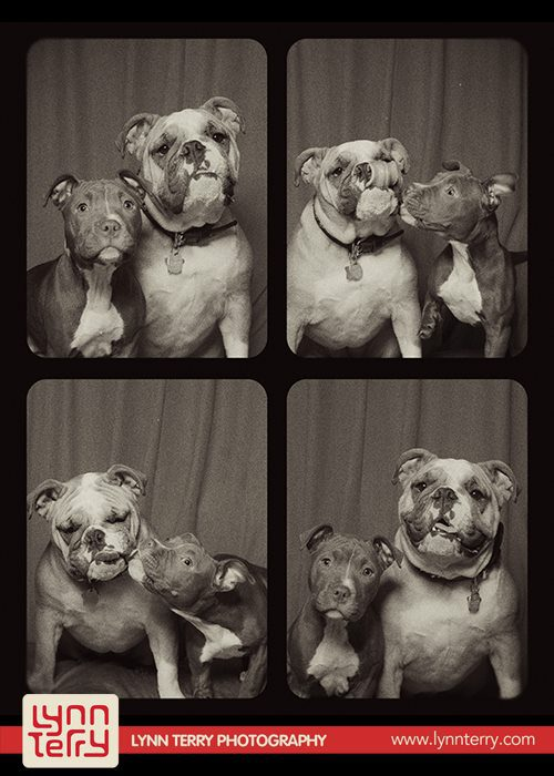 dogs-in-photo-booths-by-lynn-terry-6