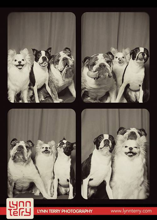 dogs-in-photo-booths-by-lynn-terry-7