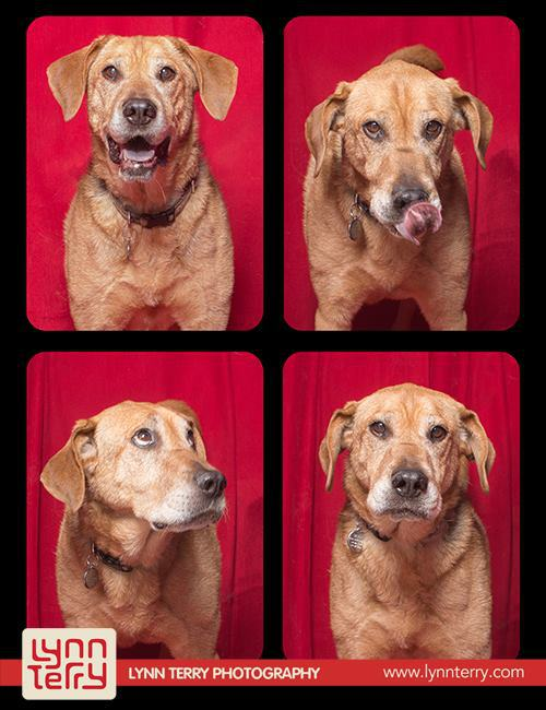 dogs-in-photo-booths-by-lynn-terry-8