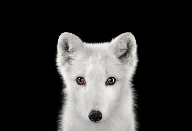 exotic_animals_studio_portraits_brad_wilson_01