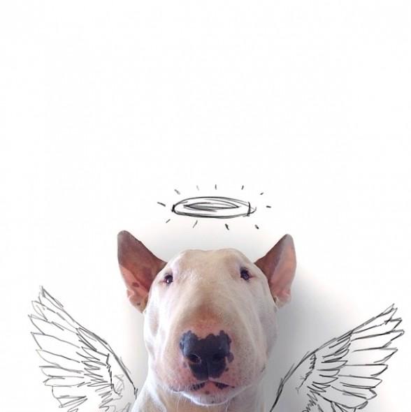 9.17.14-Jimmy-Choo-Wonder-Dog2-588x590