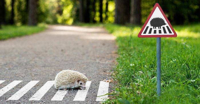 tiny-animals-road-signs-tinyroadsign-clinic-212-fb__700