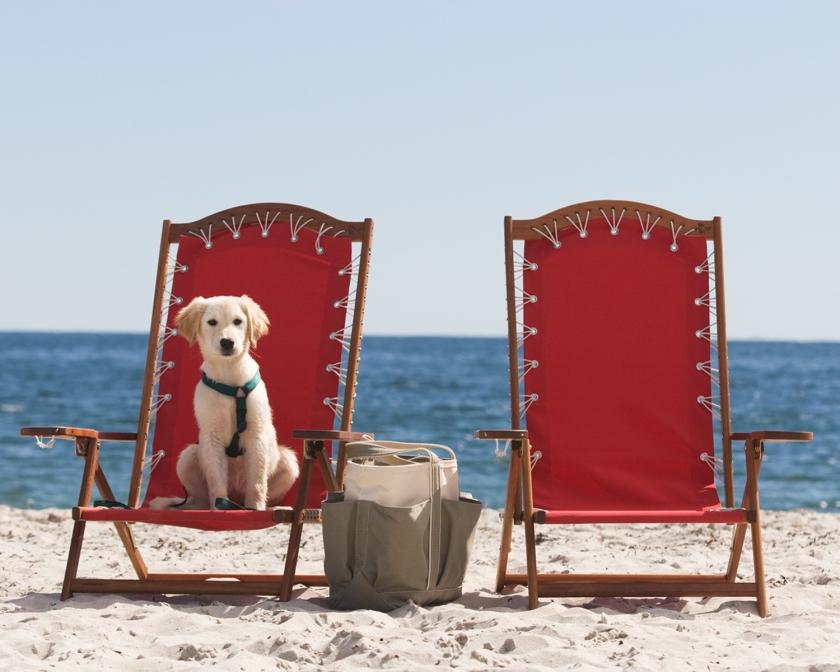 Inn-by-the-Sea-puppy-copy