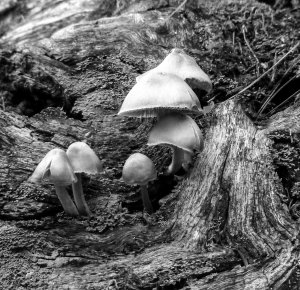 6-mushrooms-on-a-log