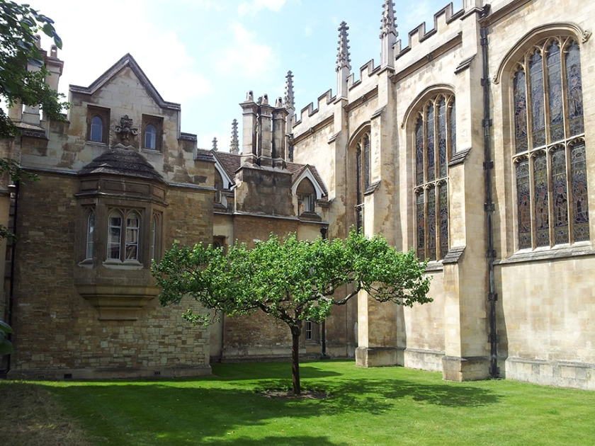 Newtons-apple-tree-and-rooms-at-Trinity-College