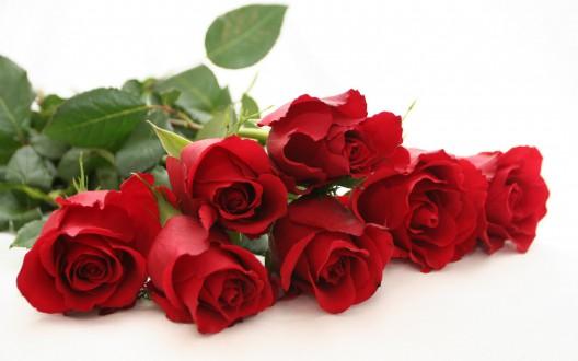 Beautiful-red-rose-wide-hd-new-wallpaper-red-rose-free-beautiful-desktop-image