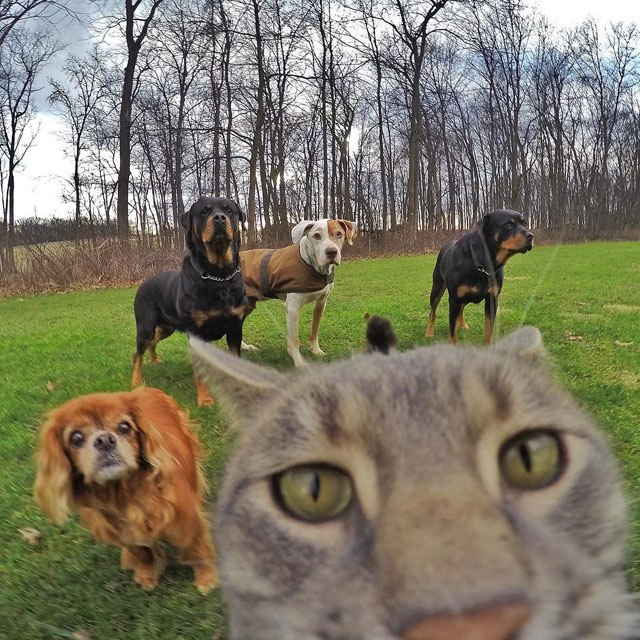 manny-the-cat-takes-better-selfies-than-you-6
