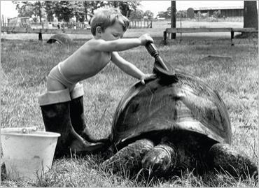 img_Child-and-Turtle_John-DRYSDALE_ref-160.003323.00_mode-zoom
