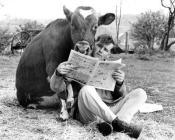 man-and-cow-share-a-newspaper-john-drysdale-200369