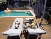 dog-and-kitten-on-sun