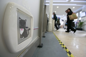 15/05/2013 Felix the cat who has been adopted by Huddersfield railway station who has been given her very own personalised cat flap to allow easy access through the newly-installed platform ticket barriers. rossparry.co.uk/syndication