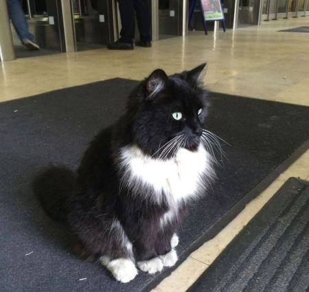 Felix-the-Huddersfield-Station-cat