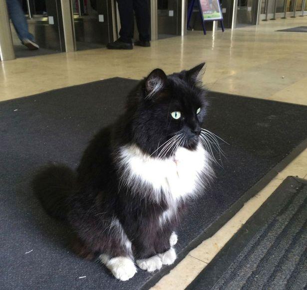 Felix-the-Huddersfield-Station-cat