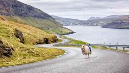 wewantgooglestreetview-sheep-view-360-faroe-islands-1