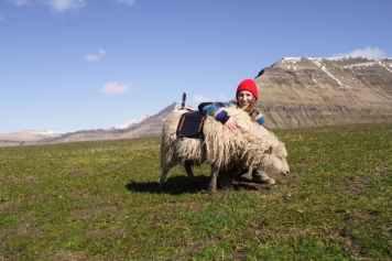 wewantgooglestreetview-sheep-view-360-faroe-islands-4