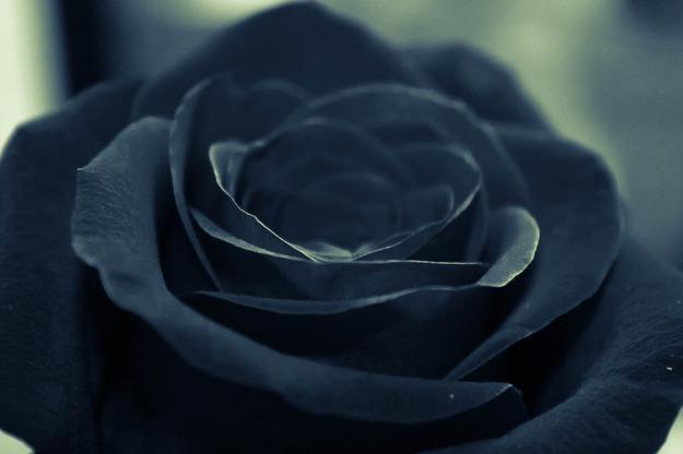 black-925638_960_720