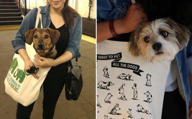 dogsinbags