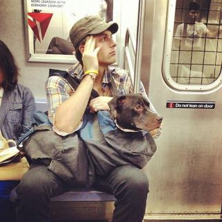 oversized-dogs-ride-NYC-subway-3
