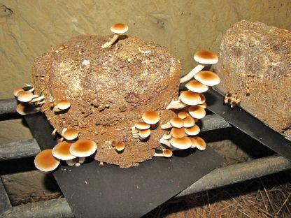 Mushroom-Museum