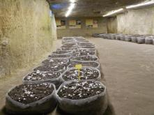 salle-de-champignons