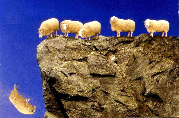 sheep-off-cliff