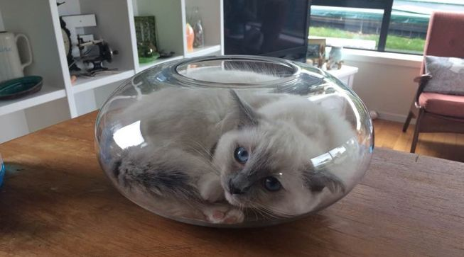 cat-curled-up-fish-bowl-jpg-653x0_q80_crop-smart