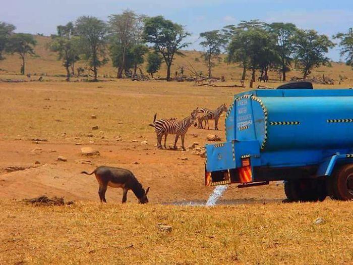 man-brings-water-wild-animals-kenya-14-58aac6ff63821__700