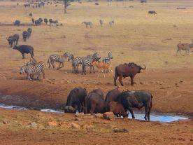 man-brings-water-wild-animals-kenya-16-58aac704e53f2__700