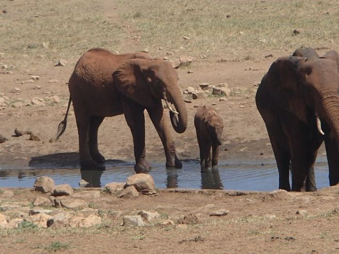 man-brings-water-wild-animals-kenya-19-58aac70defc68__700