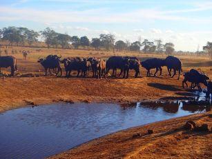 man-brings-water-wild-animals-kenya-2-58aac6ddab715__700