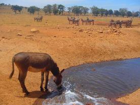 man-brings-water-wild-animals-kenya-6-58aac6e8aca1d__700
