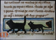manuscript_illustration8