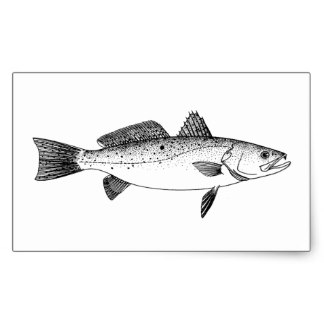 spotted_seatrout_speckled_trout_vintage_line_art_rectangular_sticker-r1e2cd8a727e942cd8ef6bb43e513a764_v9wxo_8byvr_324